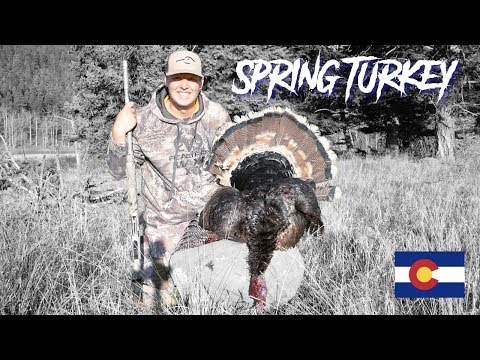 Turkey Hunting In Colorado Mountains - 2018 (Public)