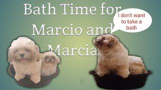 Grooming Marcio and Marcia