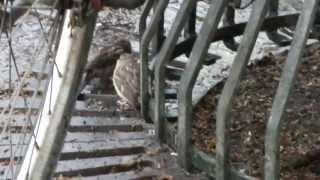 Kleiner Spatz im Regen - Little Sparrow