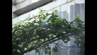 Монтаж систем туманообразования(Монтаж систем туманообразования -- один из видов деятельности компании Sun City. Занимаясь монтированием систе..., 2013-10-24T12:49:10.000Z)