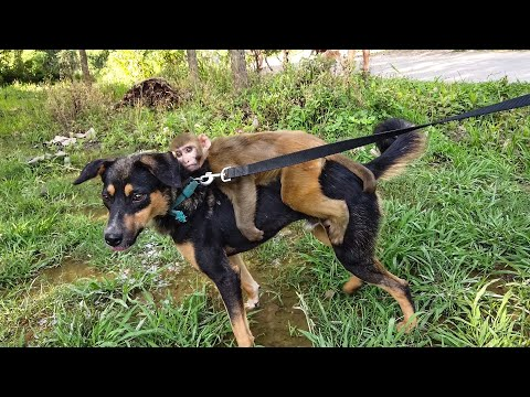 This disabled monkey & dog will make you smile