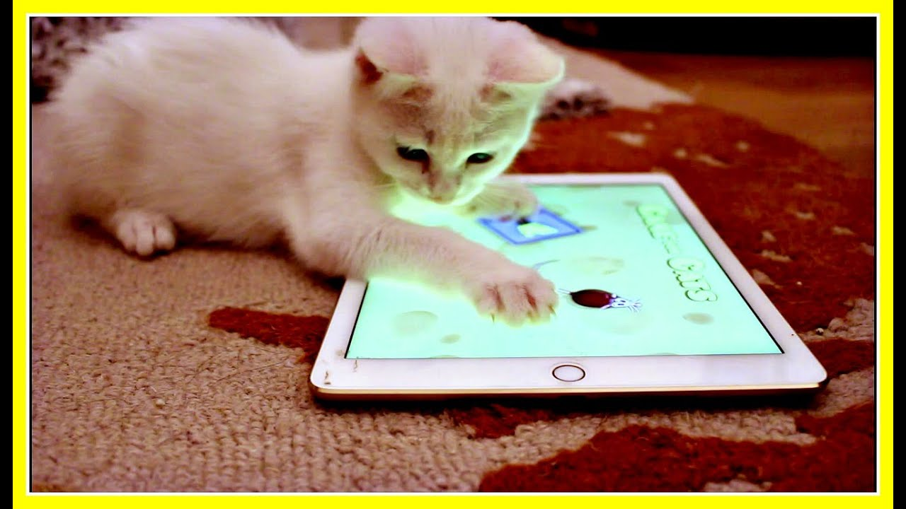 Mimi The Cat Cute Kitten Loves Playing with an iPad Cat Game