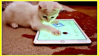 Mimi The Cat, Cute Kitten Loves Playing with an iPad Cat Game!