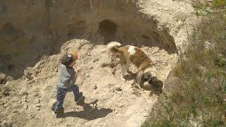 Бой в песчаном карьере, мальчик, собака, девочка, бабочка, Московская сторожевая.