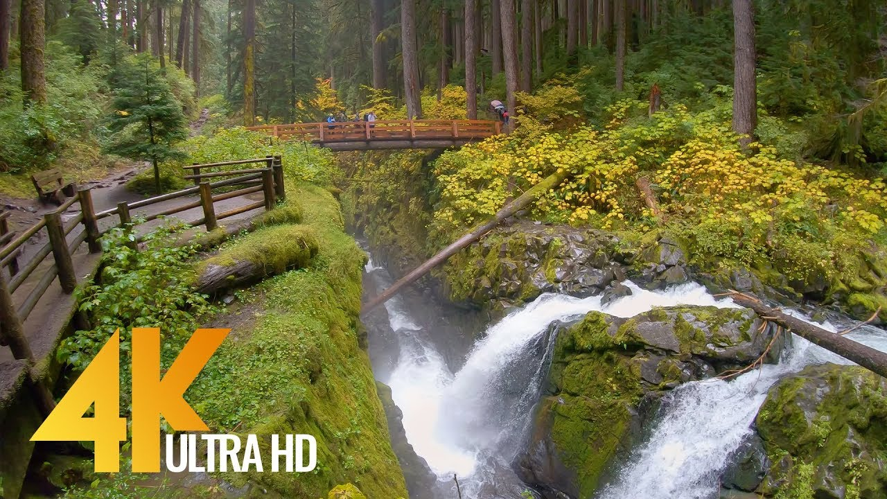 4K Virtual Hike - Sol Duc Falls Nature Trail