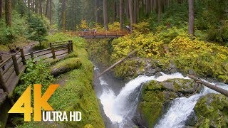 4K Virtual Hike - Amazing Nature Scenery with Soothing Music - Sol Duc Falls Nature Trail