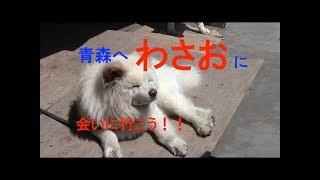 薬師丸ひろ子が出演した映画「わさお」。その映画の犬「わさお」に会い...