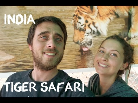 Sariska Tiger Reserve -Safari from Jaipur (Travel Vlog)