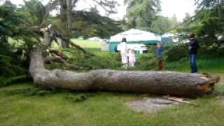 inside park campsite...fallen branch 2/5/11