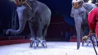 Цирк Кобзов. Номер со Слонами