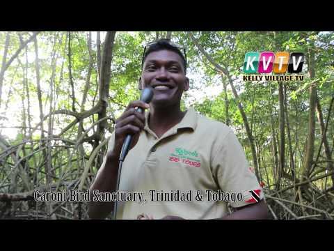 Caroni Bird Sanctuary with Kalpoo's Ibis Tours