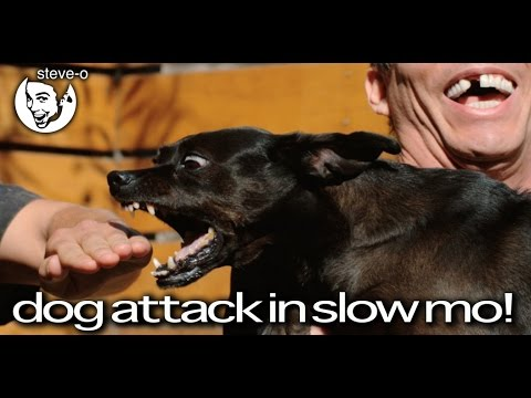 Dog Attack In Slow Motion! - Steve-O