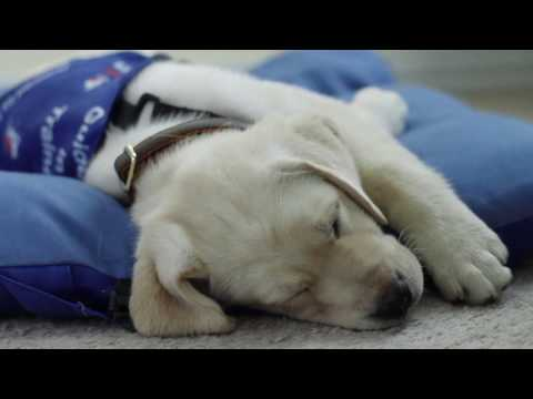 I Have A Dream, Guide Dogs of Texas