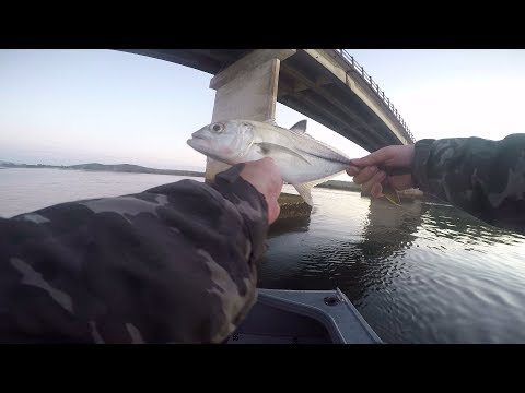 TOPWATER TREVALLY AT SOUTH WEST ROCKS | FLATHEAD