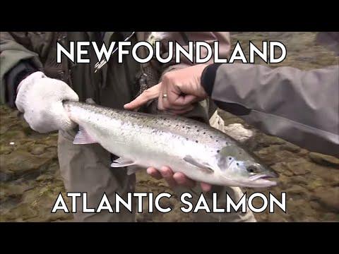 Essentials Of Salmon Fishing