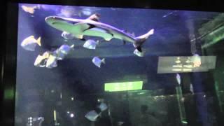 Oceanarium Gdynia  Panasonic SD90