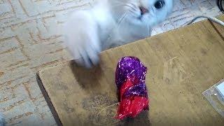 Маленькая воровка - кошечка Трикси | Little cat-thief Trixie
