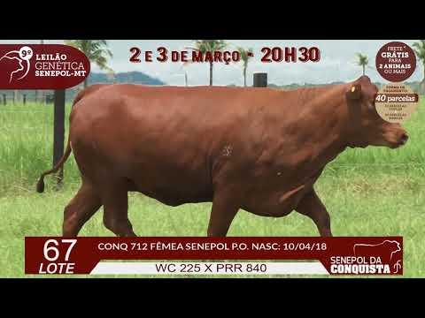 LOTE 67 CONQ 712