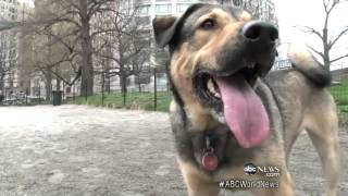 Dogs Have Health Benefits For Humans