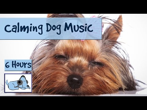 Over Five Hours of Relaxation Music for Dogs! Music to Help Your Dog Relax While You're Away ...