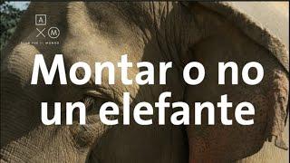 ¿Se debe montar a los elefantes?