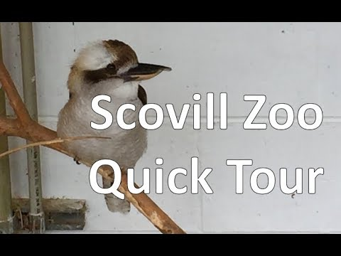 Scovill Zoo Quick Tour - 2018