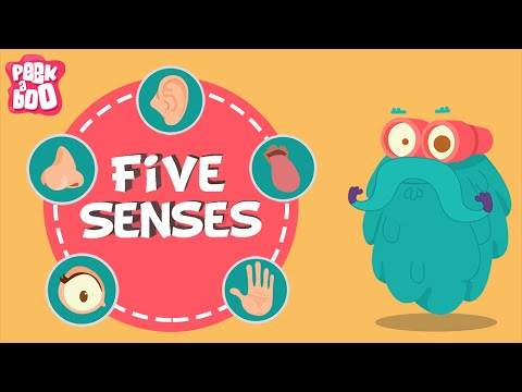 The Five Senses | The Dr. Binocs Show | Educational Videos For Kids