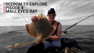 Freedom to Explore - Episode 4 - Small Eye'd Ray - Undulate Ray