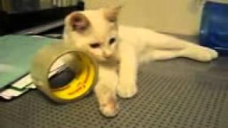 Кошка и скотч смотрел и ржал