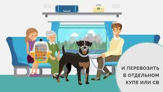 О перевозке животных железной дорогой  Видео от РЖД
