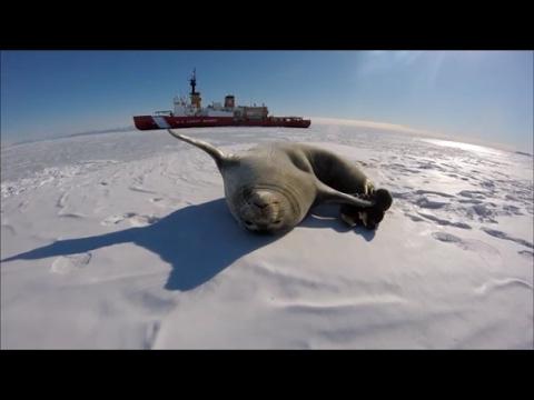 US Coast Guard Cutter Polar Star Operation Deep Freeze 2016