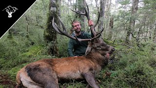 Public Land Roar 2020 | 13 Point Red Stag | Southland NZ