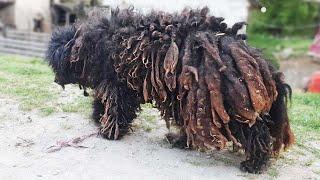 10 Самых Невероятных Трансформаций Животных После Спасения