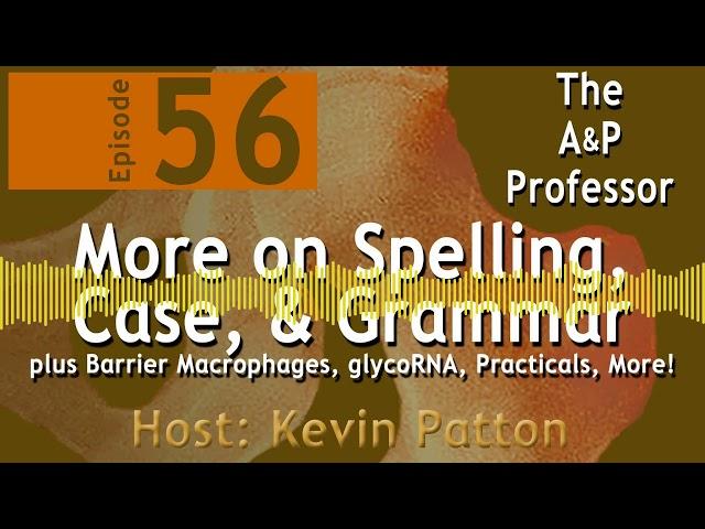 More on Spelling, Case, & Grammar | Episode 56