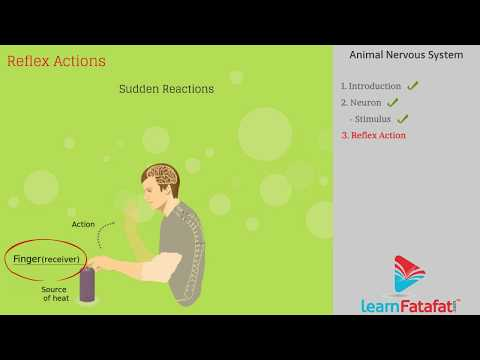 Control and Coordination Class 10 Science | Part 1 Animal Nervous System