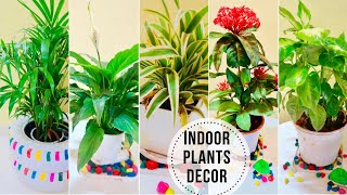 Best Indoor Plants In India For Decoration | Easy to Grow Indoor Plants | Full Guide