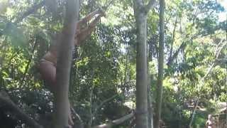 Baixar O pulo Thais Nunes 2 thundercats