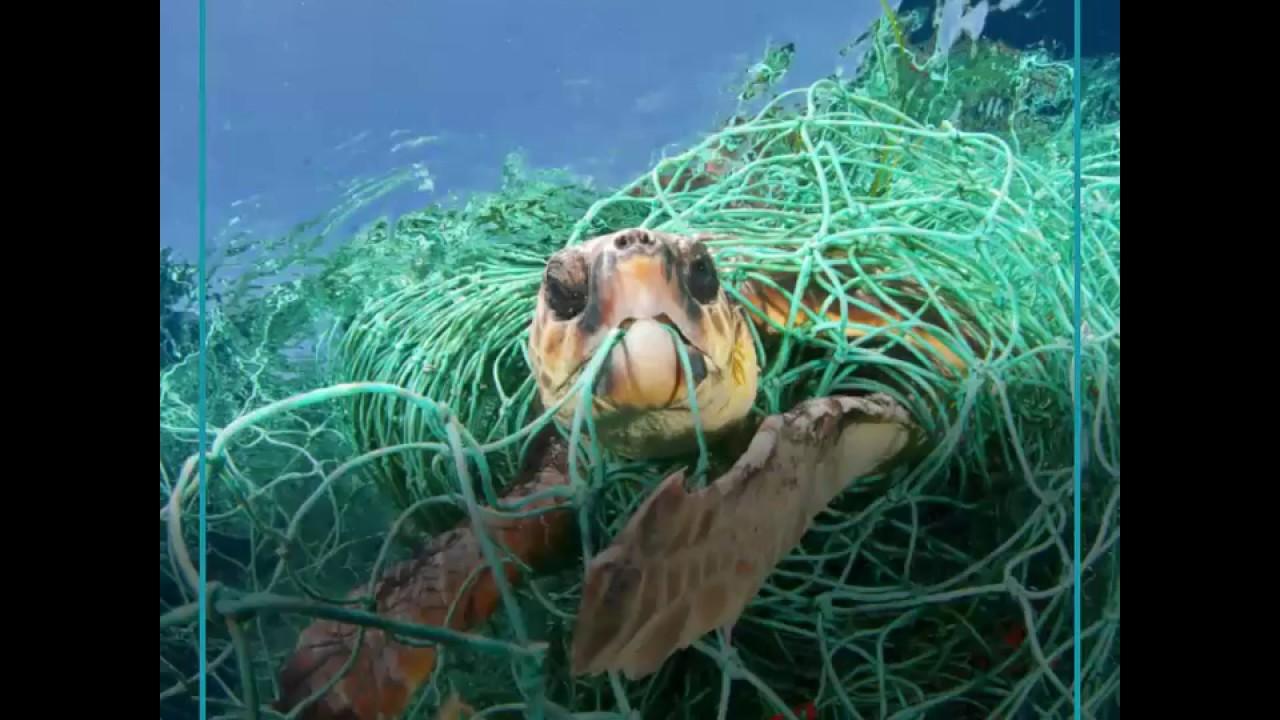 Los animales mueren por el plástico.