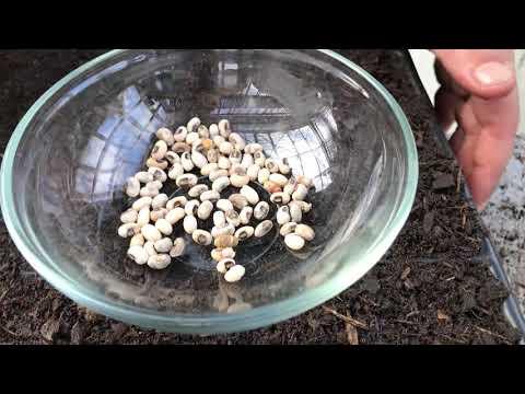 Saatguttest 1.Teil: Wie testet man die Qualität seines Saatguts?