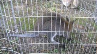 Cute Lil Wallaby & Piglets