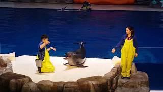 제주도 아쿠아리움 오션아리아 공연 2부 물개,돌고래쇼