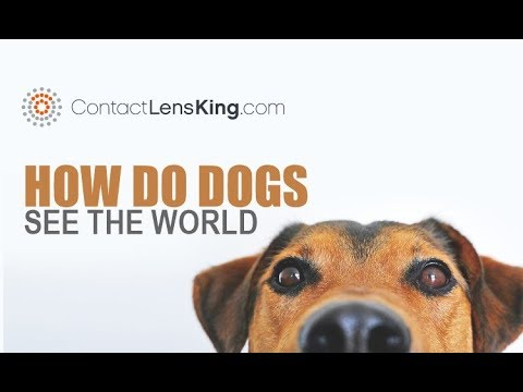 How Dogs See The World | Are Dogs Color Blind | Visual Acuity Of Dogs | How Dogs See At Night