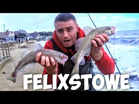 ASSO Products + Felixstowe Cod Fishing  - Sea Fishing