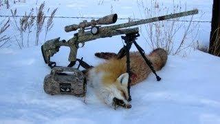 Fox Hunt - Montana 2011