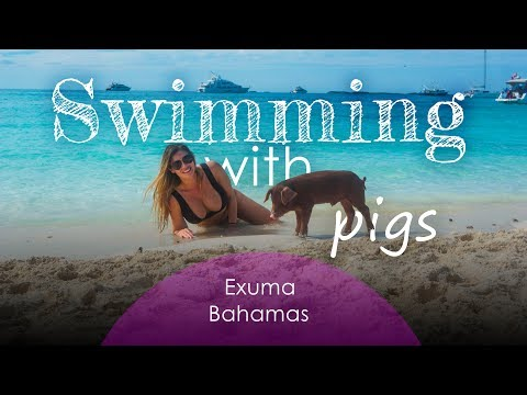 Swimming Pigs Exuma Bahamas   Swimming with Pigs, Pig Beach   Things to do in the Bahamas (GoPro 4K)