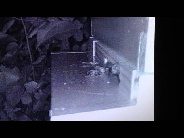 Guard Bees at Night