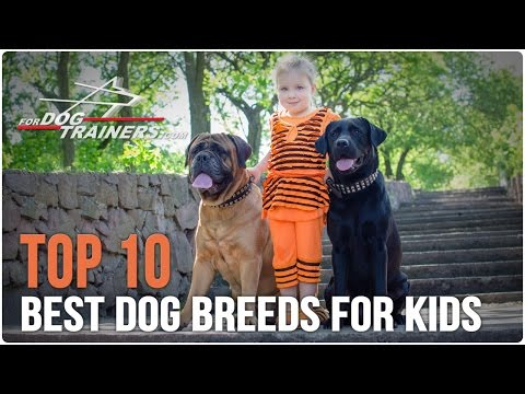 Top 10 Best Dog Breeds for Kids - ForDogTrainers Top 10 Chart 🐕