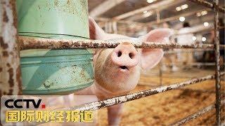 [国际财经报道]热点扫描 保障市场供应 国家多举措力促生猪生产  CCTV财经
