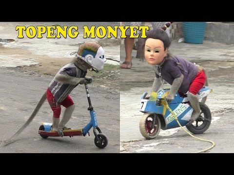 Thumbnail: TOPENG MONYET The best Monkey street attraction