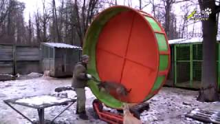 Питомник ездовых собак на севере Москвы